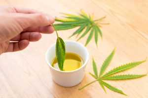 Small bowl of massage oil with hemp leaf dipping in the CBD Massage oil.